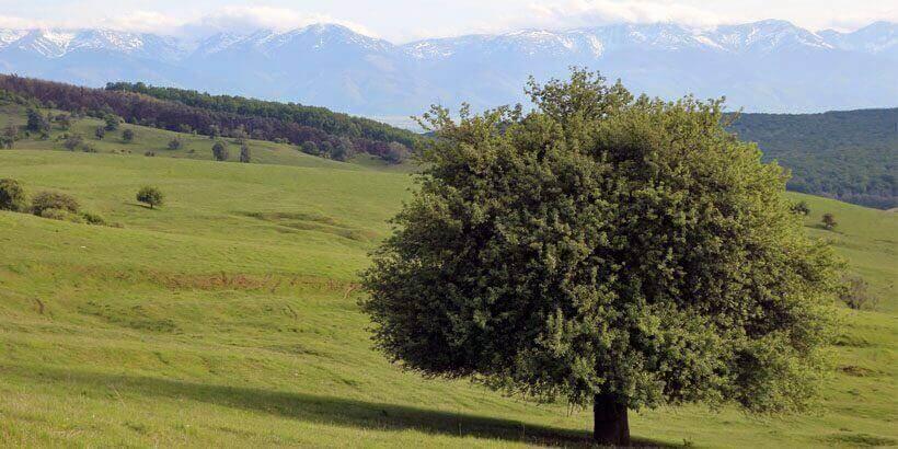 9 dagen fietsvakantie roemenie zuidelijk transsylvanie (3)