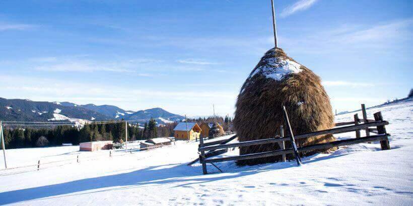 sneeuwwandelen in het apuseni gebergte roemenie (14)