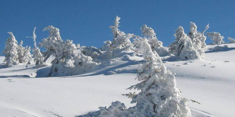 sneeuwwandelen in het apuseni gebergte roemenie (9)